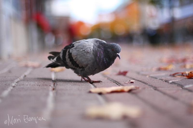 Photoportfolio